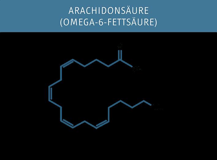 Molekuelstruktur der Arachidonsäure (Omega-6)