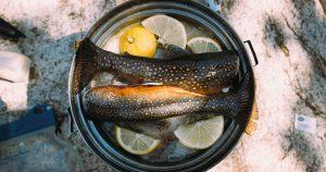 Zwei Fische im Topf